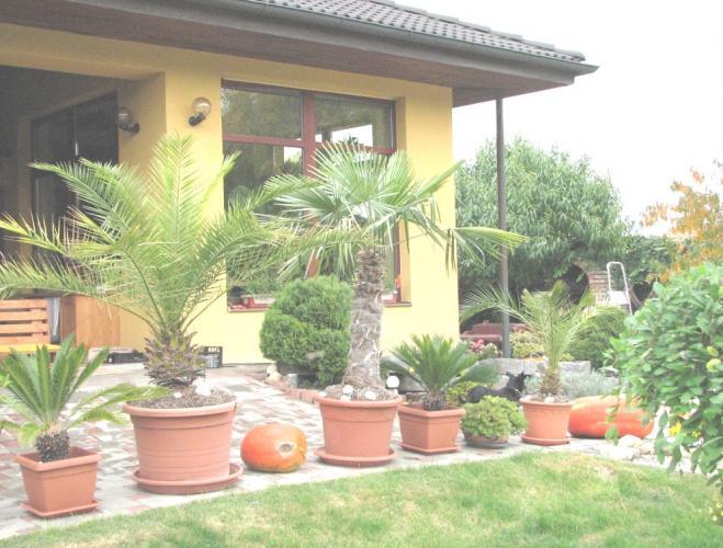 Reality Krásny bungalov na predaj v Turni okres Senec