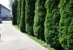 Reality 2 domy + sklad, pozemok s parkovaním, vhodné na podnikanie, Podunajské Biskupice