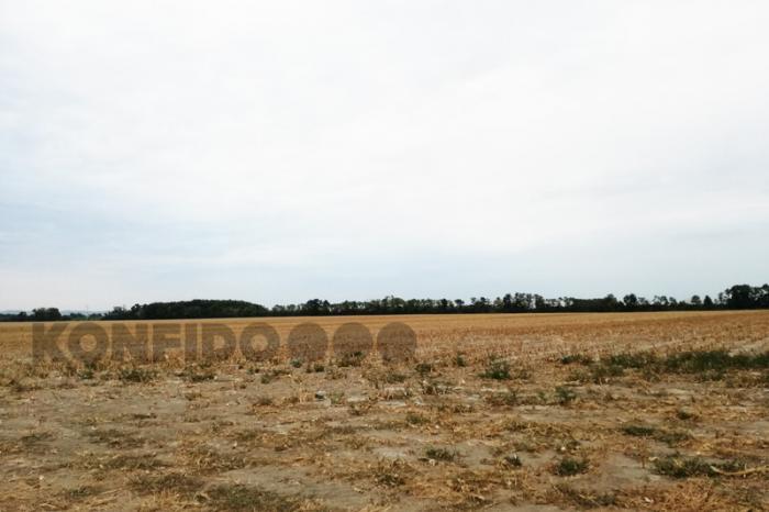 Reality Veľký pozemok 31,5 ha, Pusté Úľany, Senecká cesta