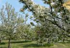 Reality Kúpime pôdu, záhradu, vinohrad v okrese Pezinok.