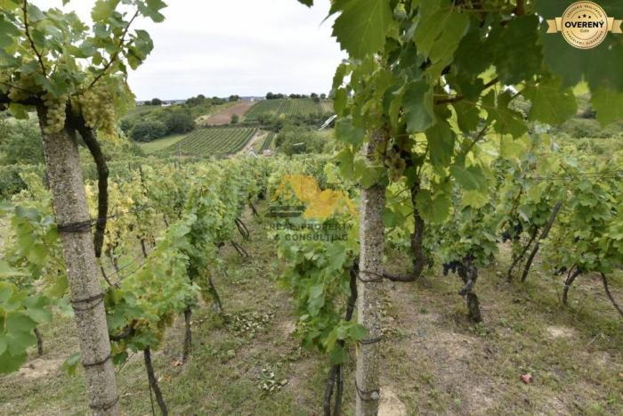 Reality Predám vinicu vo vinárskej oblasti Strekov